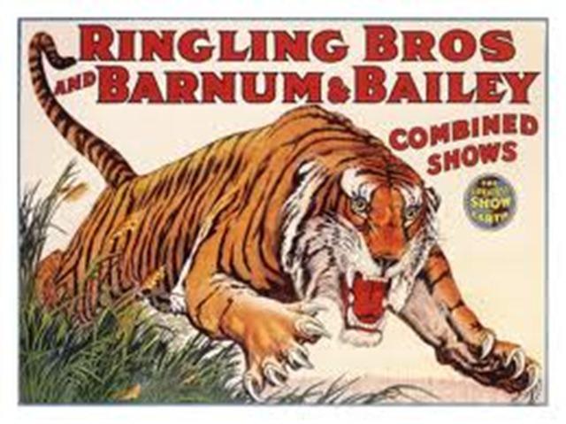Ringling Bros Tiger