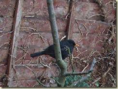 tree birdie