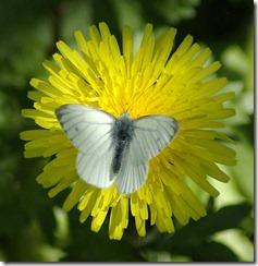 flutterby2
