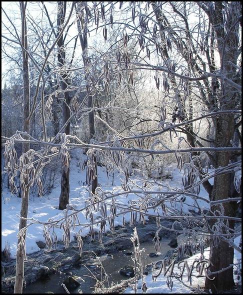 motljus-och-rimfrost.