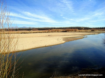 The Rio Grande at Mesilla Valley Bosque State Park, Las Cruces, NM