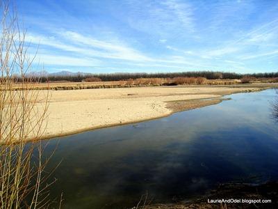 The Rio Grande at Mesilla Valley Bosque State Park, Las Cruces, NM