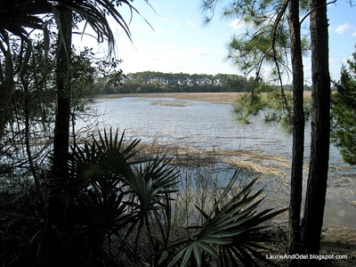 Scene from a hike at Skidaway Island State Park