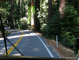 Navigating through the Redwoods