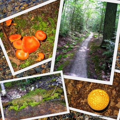 Scenes from our walk through the forest on the Mosquito Beach trail.