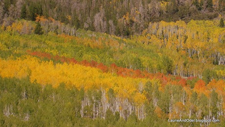 Many colors of aspen