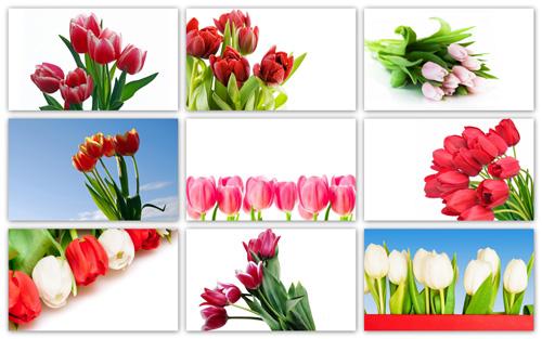 Full Hd Flowers Wallpaper Pack 001 Wallpapers Free Desktop Download