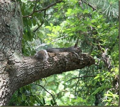 Gsquirrel