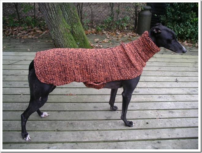 Crafting4Greyhounds: Raven ready for a cold spell