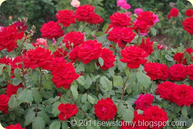 El Paso Rose Garden Red Roses