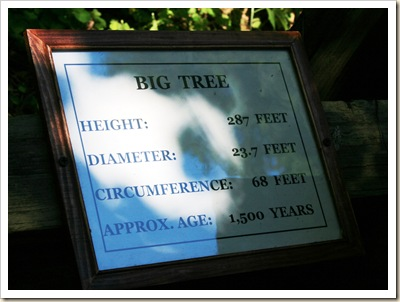 Sign at THE BIG TREE 2