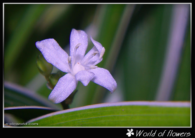 grass flower picture