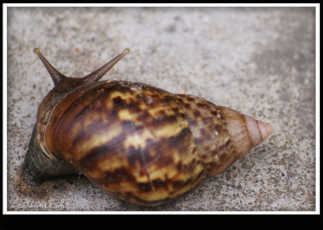 snail picture