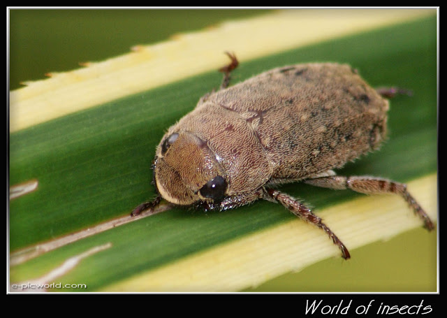beetle picture
