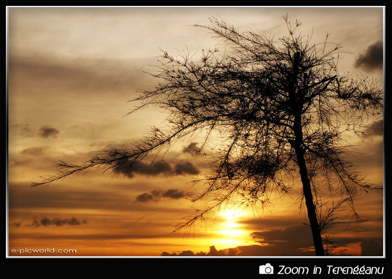 Tree silhouette and sunset picture