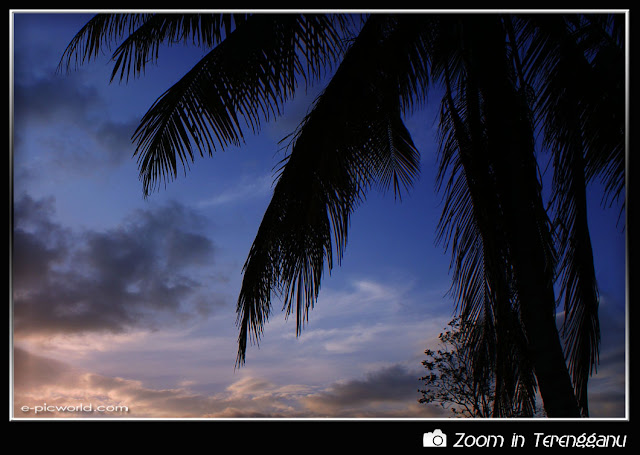 Silhouette of coconut tree at dusk