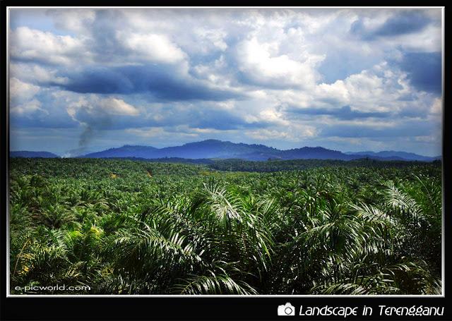 palm plantation picture