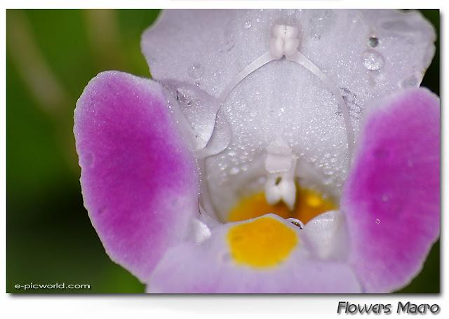 Flowers macro pictures