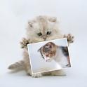 動物写真~ねこ~ icon