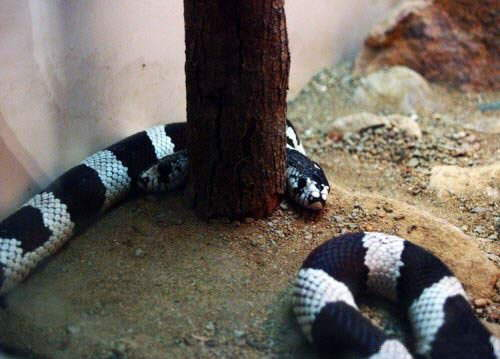 Amazing Nature : Two Headed Snake