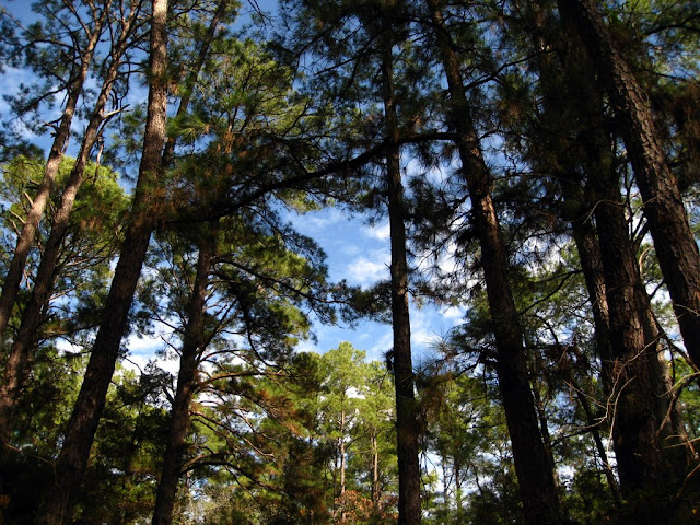 Blue Sky, Green Pines