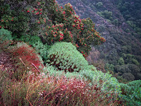 Winter Color Big Santa Anita Canyon Photo