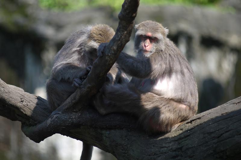 木柵動物園三