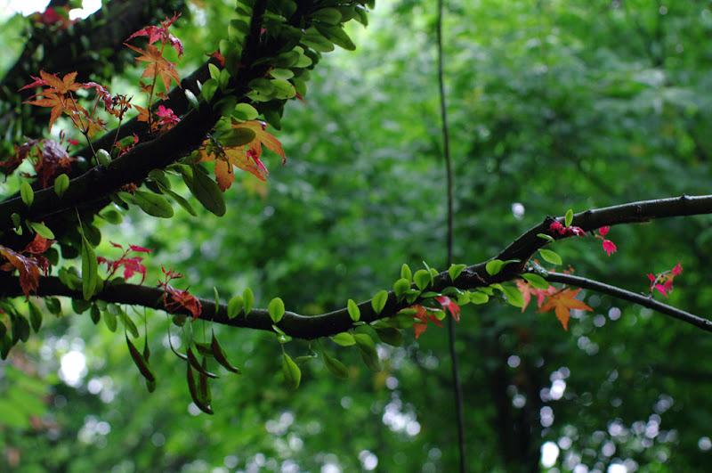 槭紅.....