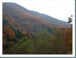 Ashiyasu Fall 2008-11-15 014