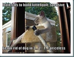 catipult
