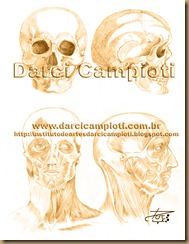 estudo anatomia 20001