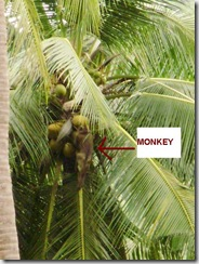 labeled monkey in tree close up