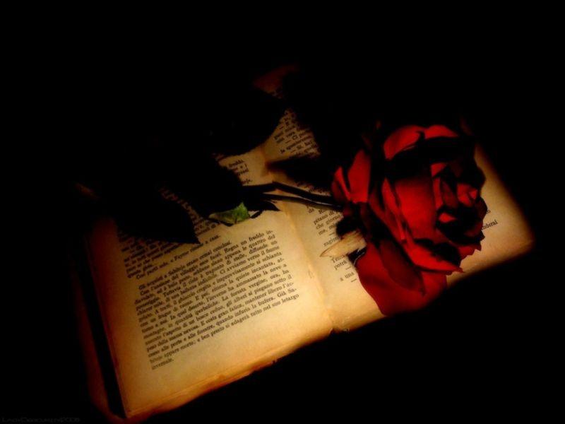 LIBROS = A SABIDURIA , CONOCIMIENTOS ..... Rosa-y-libro+(1)%5B5%5D