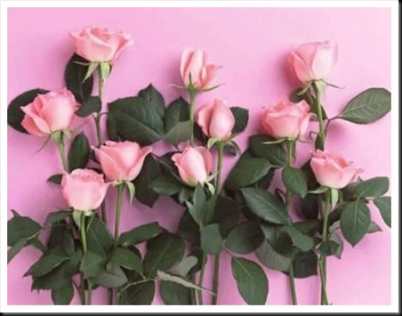 79-rosas-rosas