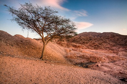 Tree on the Mountain - Aqaba