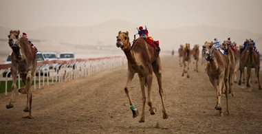 Pursuing the Levitating Camel