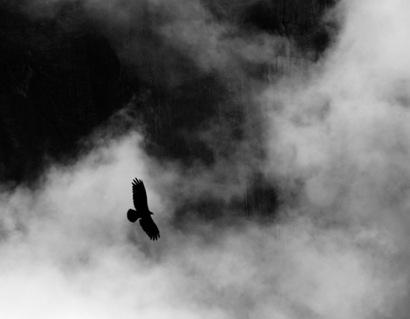 Angle Falls Bird Silohuette