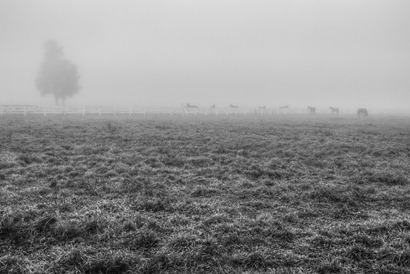 Horses in the Fog-Edit