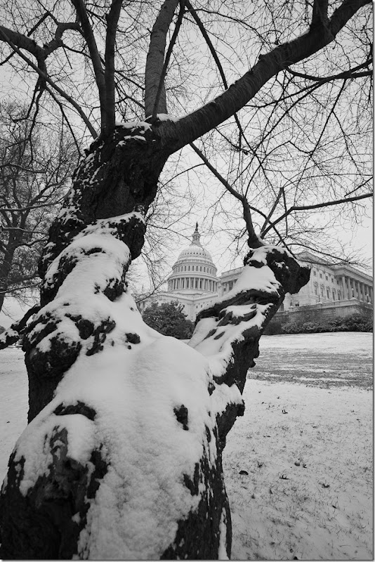 US Capitol at Christmas-4