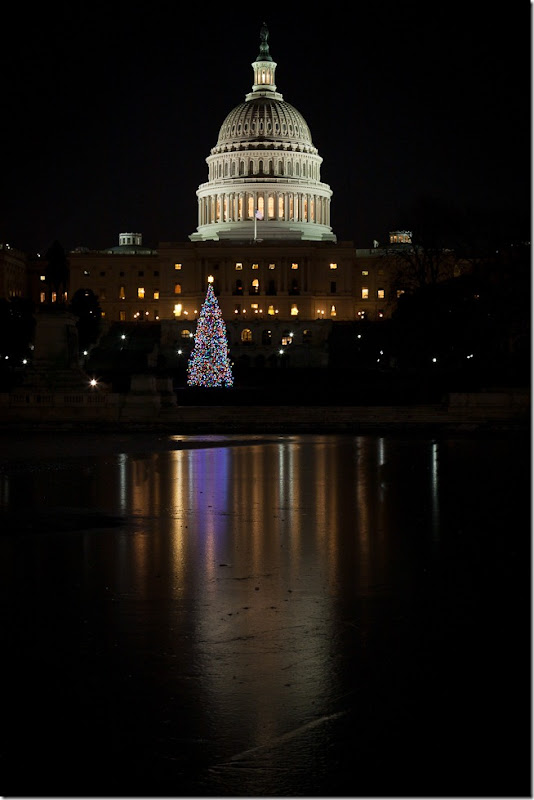 Capitol Christmas tree Reflection