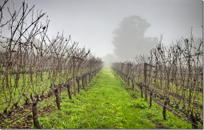 Vines in the Fog