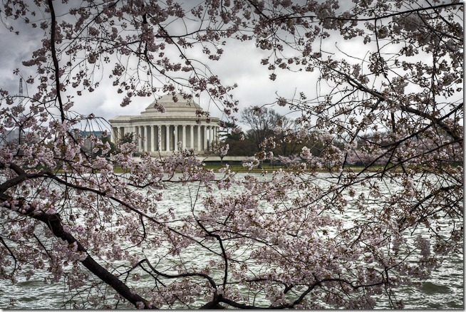 Cherry Blossoms on the Tidal Basin-2