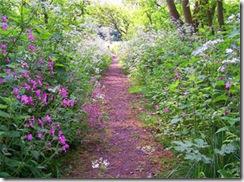 flower_path