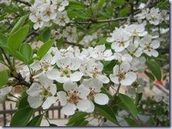 peer_flower