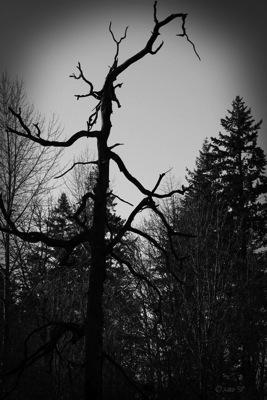 HauntedTree-BW.jpg