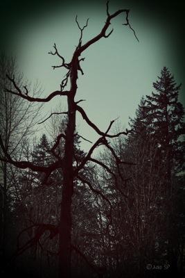 HauntedTree-70sBurn.jpg
