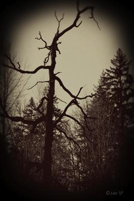 HauntedTree-VintageBurn.jpg