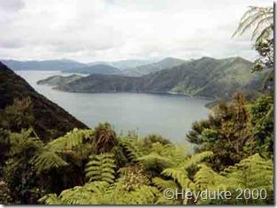 Queen Charolotte tramp, New Zealand