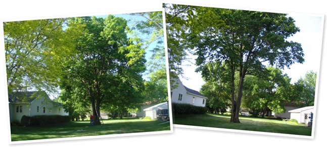 View Before and after Tree