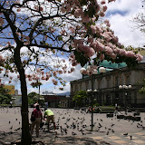 More pigeons than people in the Plaza de Cultura.